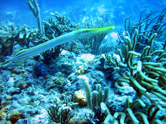 St maarten longfish for How long is fish good for